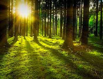 Friuli detox foresta